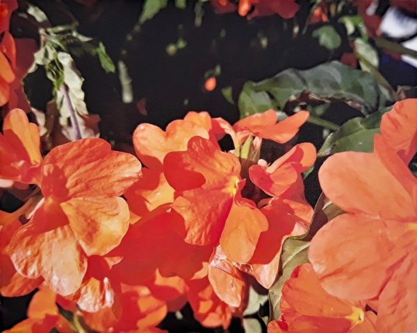Photo Canvas Print Floral Orange 04