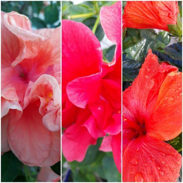 Photo Canvas Print Floral Collage 10