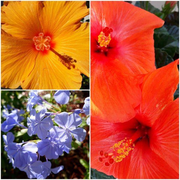 Photo Canvas Print Floral Collage 12