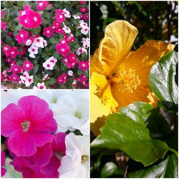 Photo Canvas Print Floral Collage 14