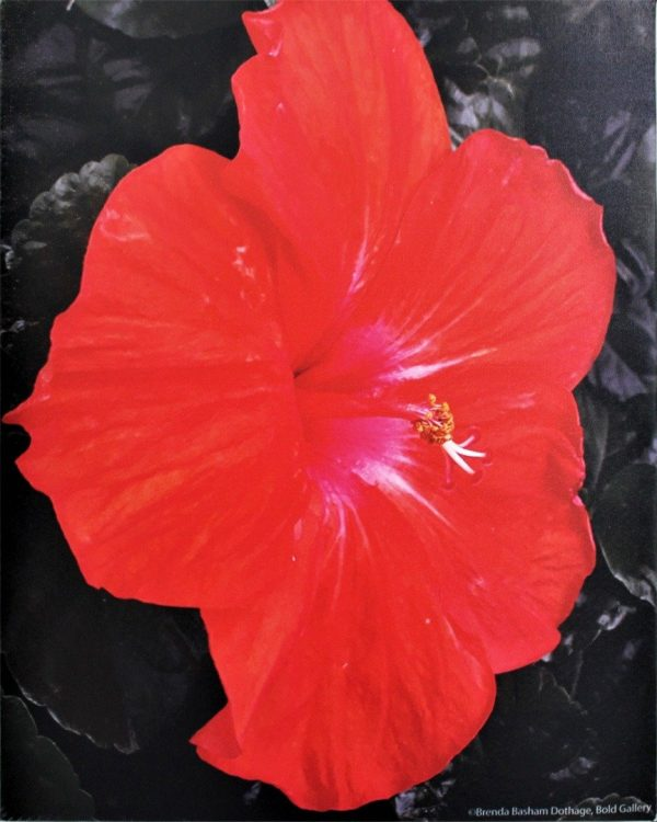 Photo Canvas Print Red Hibiscus 18