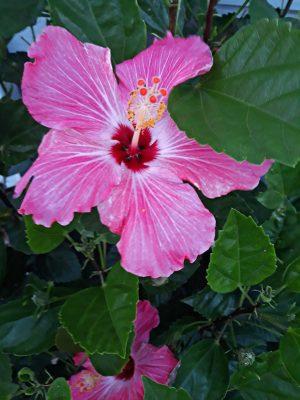 Photo Canvas Floral Print 34 16X20