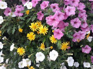 Photo Canvas Floral Print 39