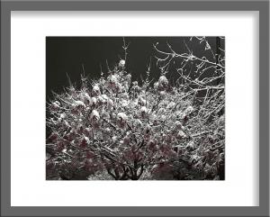 Original Photograph Snow 05