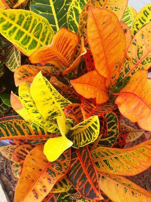 Floral Canvas Print Petra Croton 47