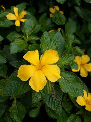 Floral Canvas Print Ramgoat Dashalong 48